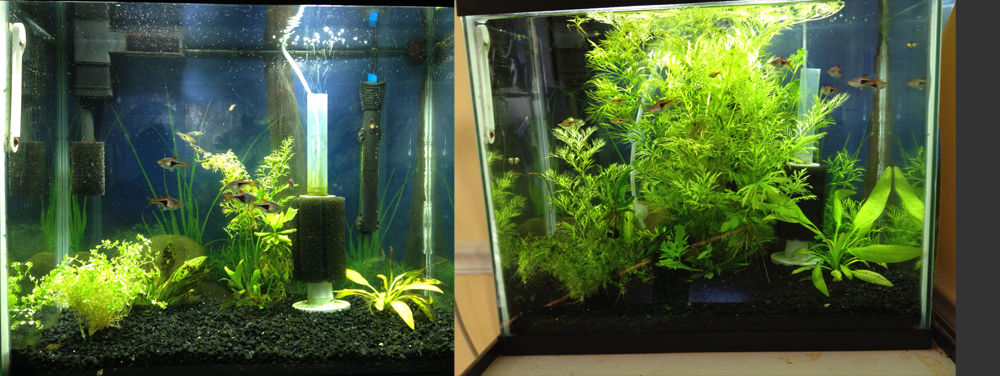 1 month of growth