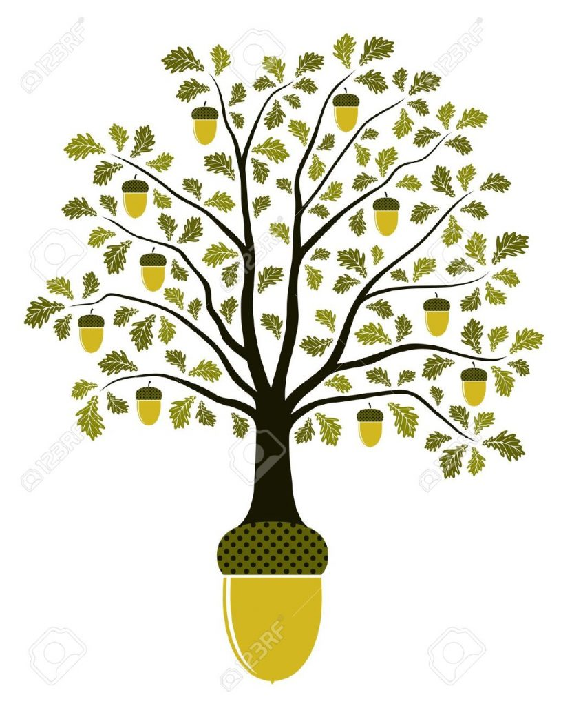13963669-oak-tree-growing-from-acorn-on-white-background-Stock-Vector